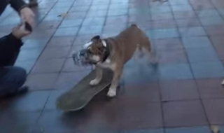 Skateboarding dog disperses angry protesters
