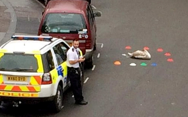 confused swans rescued by force uk police news police oracle