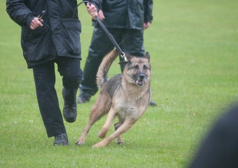 Escaped Police Dog Attacks Four People