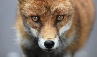 New approach to policing hunts saves Suffolk thousands