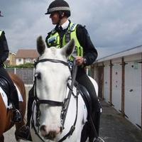 Study shows value of keeping mounted police