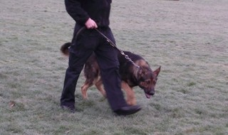 Woman 'seriously injured' by police dog