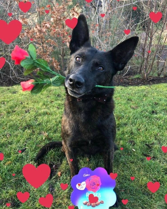 Looking for love: Northumbria's police dog Krush