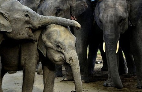 Trunk And Disorderly Elephants Go On Rampage