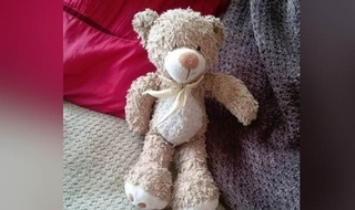 Missing teddy found safe and well after appeal