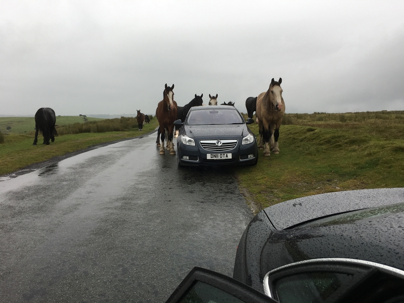 Free-roaming horses are proving to be a nuisance