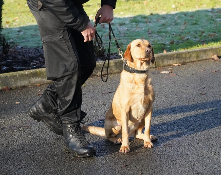 BTP introduces dedicated drug detection dog teams