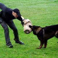 Forces urged to alter dog handler fitness tests after discrimination payout