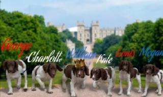 Paws for thought to security of Wills, Kate, Meghan, George, Charlotte and Louis at wedding of princess Eugenie