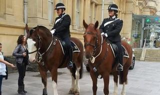 Mounted policing study conducted at Glastonbury