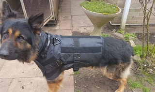 Force trials body armour for police dogs