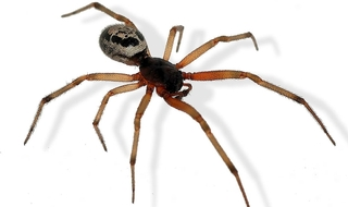 Misconduct hearing told venomous spider was flicked at gay officer
