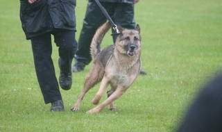 Restructured dog section promises more on call resource
