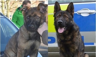 Police dog 'donated in memory of fallen officer'