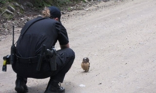 Police officers 'love baby owls', admits force
