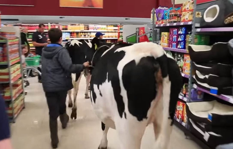 Police called after angry farmers take cows into supermarket | UK