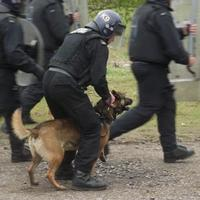 Warning: Police dog cuts 'catastrophic'