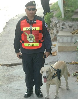 Police Dog Carries Gun