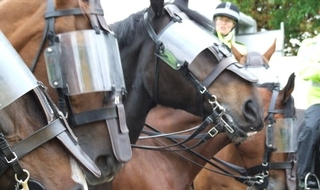Half of mounted units have turned to private sponsors in fight for survival
