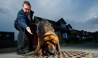 Ex-police dog employed to sniff out 'fatbergs'