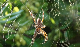 'Domestic abuse' incident turns out to be arachnophobic lone male screaming about spider